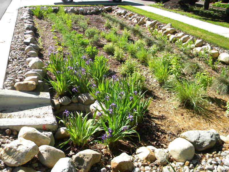 Miller Avenue Rain Garden in Ann Arbor