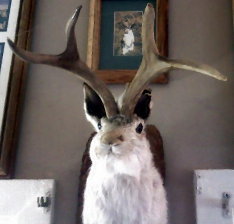 A jackalope on the wall of a restaurant near the west entrance to death valley.
