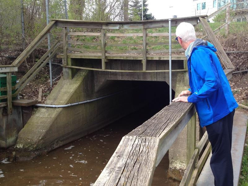 Dr. Larry Lemke at the outflow of Allen's Creek into the Huron River.