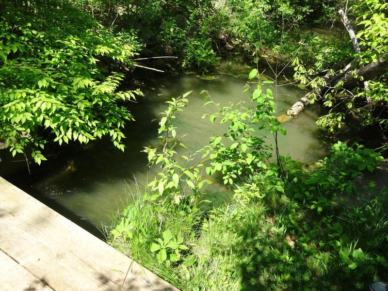 Directly downstream of the Pall-Gelman discharge outlet.