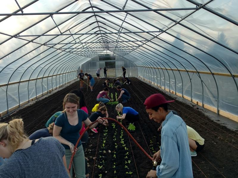 Inside the Hoophouse at U-M's Campus Farm at the Matthaei Botanical Gardens.