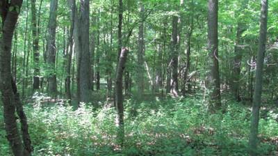 Arbor Woods