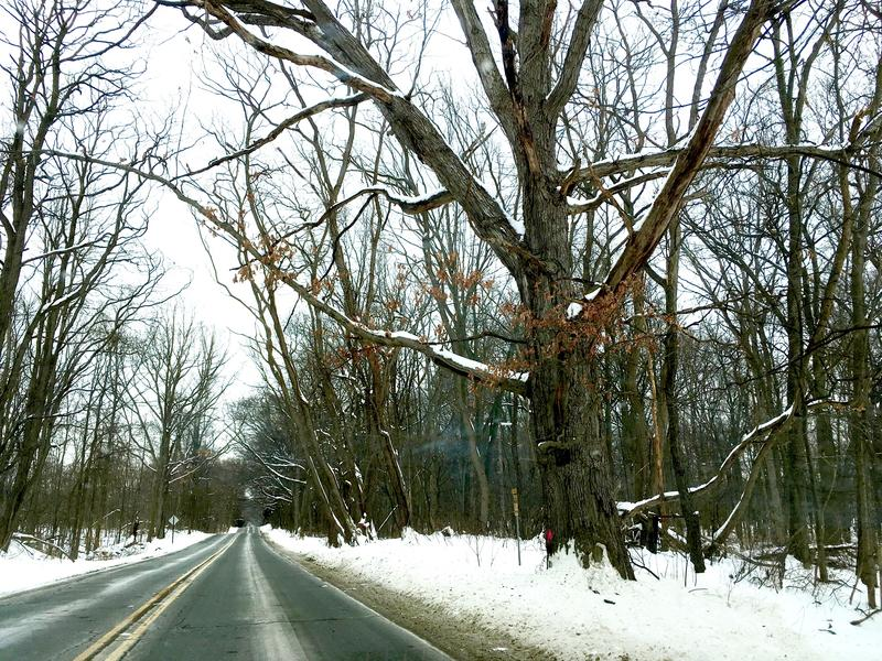 Mast Road, Dexter, prior to safety grant tree cutting