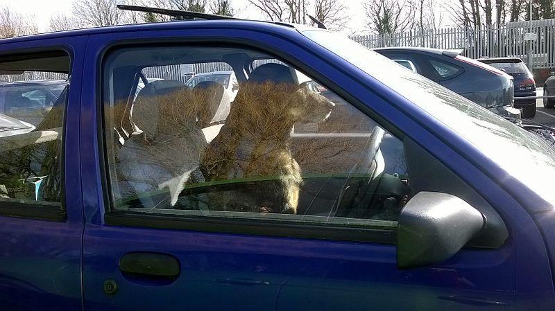 dogs in cars bill passes michigan senate committee wemu