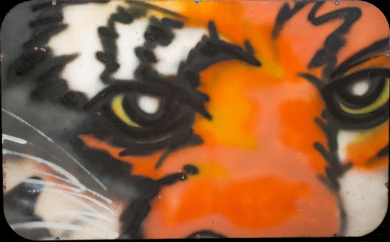 """The Eyes of the Tiger"""