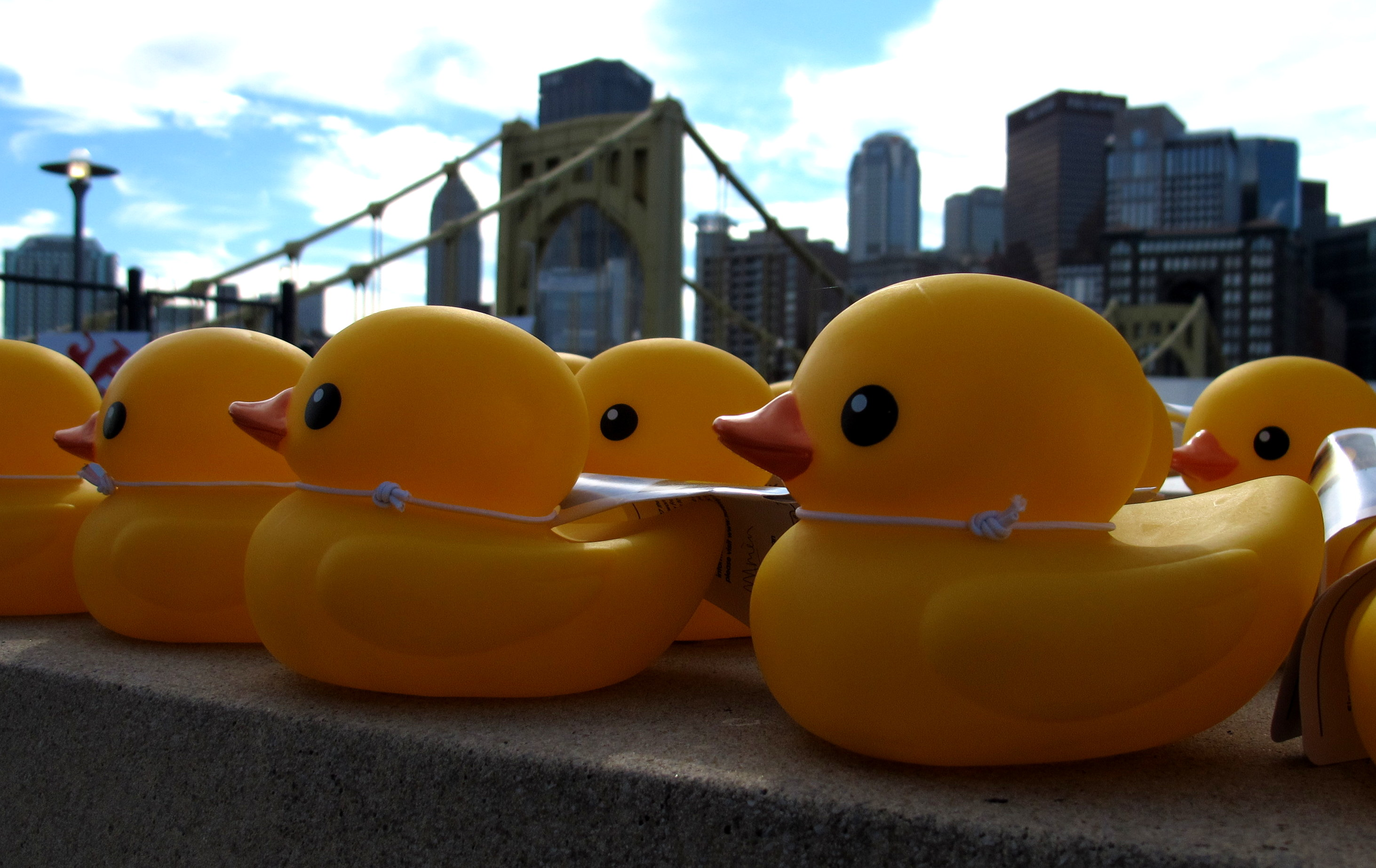 Rubber Duck Project | 90.5 WESA