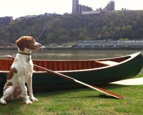 In the coming weeks, the Ohio River will serve as bath tub and laundry machine as  R. Ian Davis and his Brittany Spaniel, Gracie, paddle the 1,000 mile length of the Ohio River, from Pittsburgh, PA to Cairo, IL