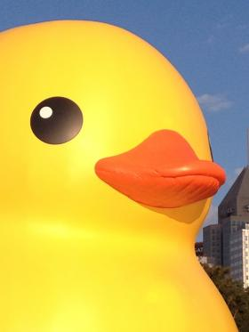 The 40 foot tall rubber duck created by artist Florentijn Hoffman, will continue to float at Point State Park until October 20th, 2013.