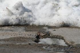 Pittsburgh Public Works crews will be out for the next few days patching potholes. To report a problem area call 311.