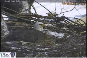 A screen capture of a live video feed shows a bald eagle in its nest in Hays on Wednesday.