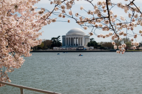 During the Cherry Blossom Festival visitors can take paddle boats across the Potomac River to the Jefferson Memorial.