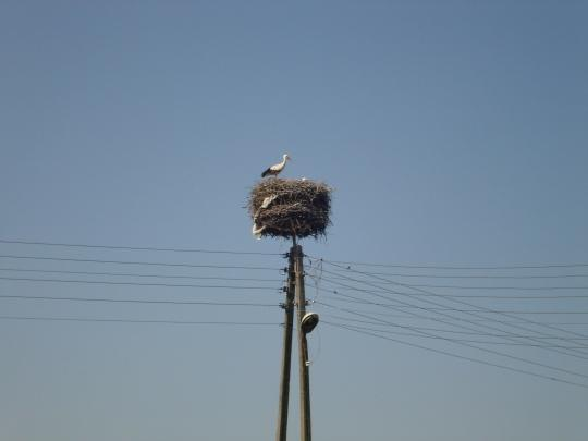 Every Spring, 25 percent of the 325,000 white storks that breed in Europe, return to Poland from Africa.