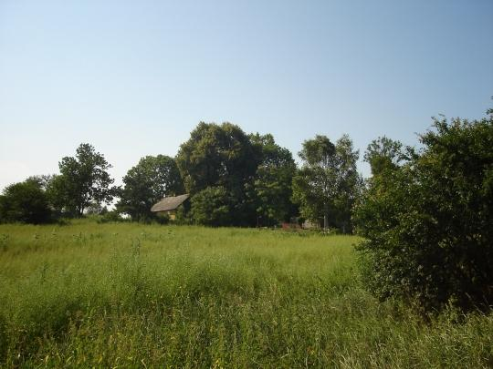 A field in Lesniowice.