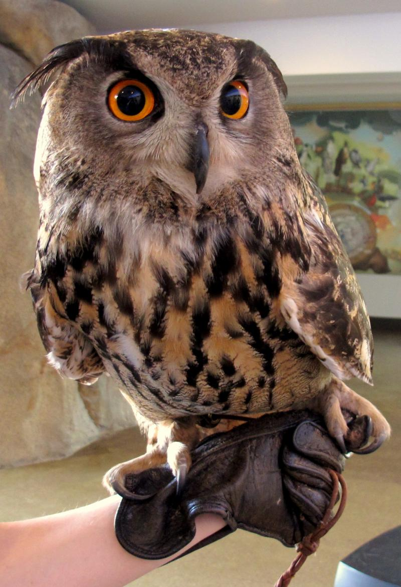 Gandalf is the uncle of the baby owl