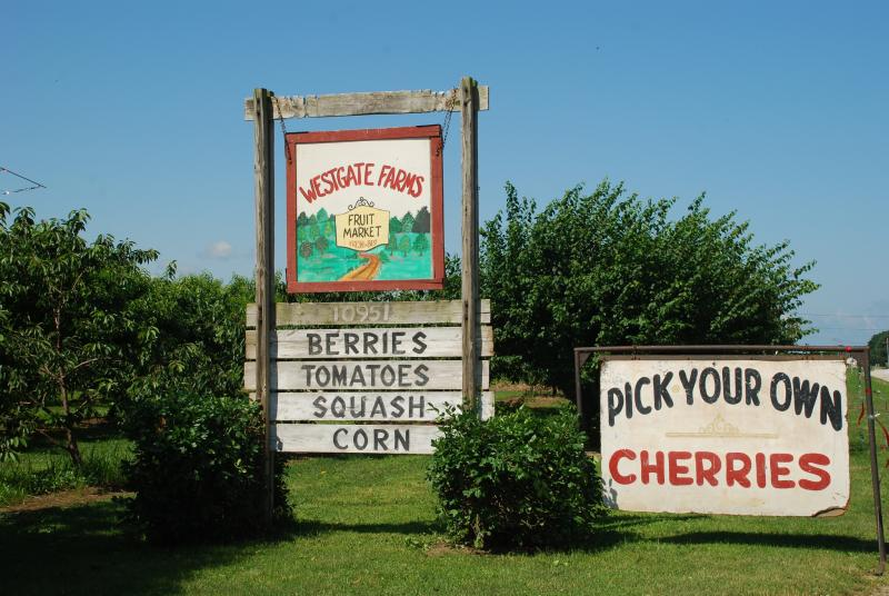 U-Pick Cherries at West Gate Farms in Erie, PA