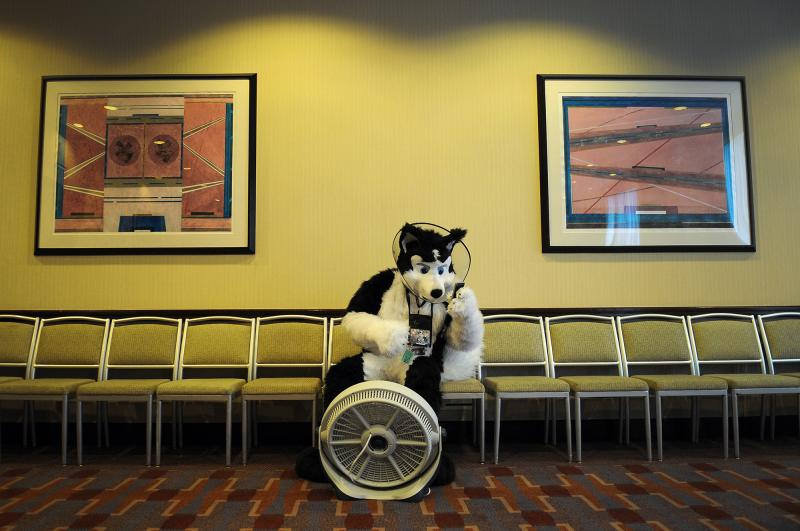 Sniffer the Husky checks his phone in a cooling area at the Westin Convention Center Hotel during Anthrocon. The head of a fursuit can reach 120 to 130 degrees, said Anthrocon Programming Director John Cole.