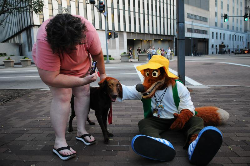 Brer Fox, from the Orlando area, mingles with Abby, an 8-month-old chocolate Labrador retriever and its owner, Michelle Smith.