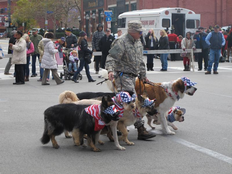 Patriotic pooches at Monday's parade