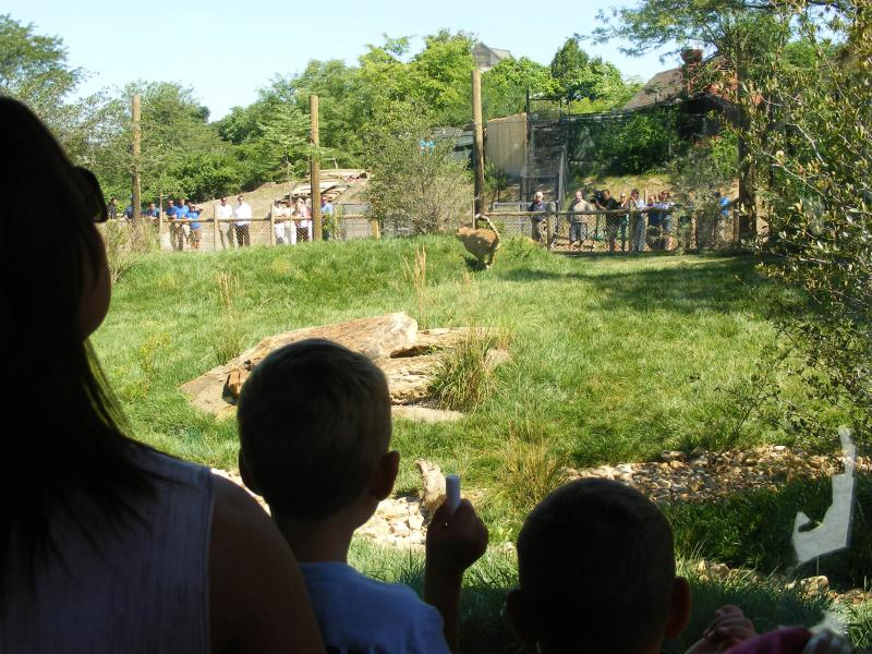 Visitors watch the cheetahs run in their new environment