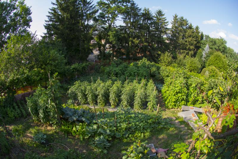 View from above the Murcurios' quarter-acre garden