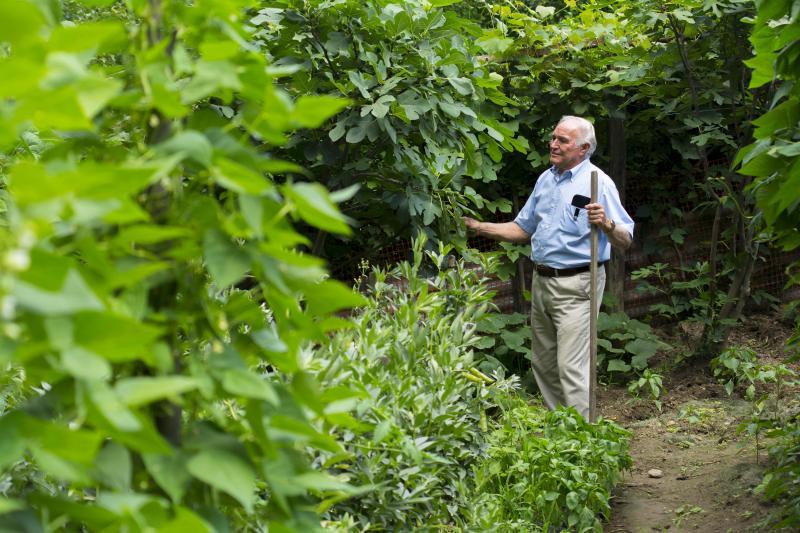 Nicola Mercurio checking a fig tree in his garden