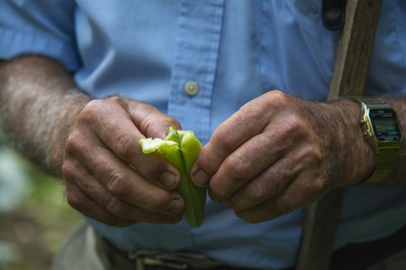 Nicola Mercurio shows how to eat fava beans