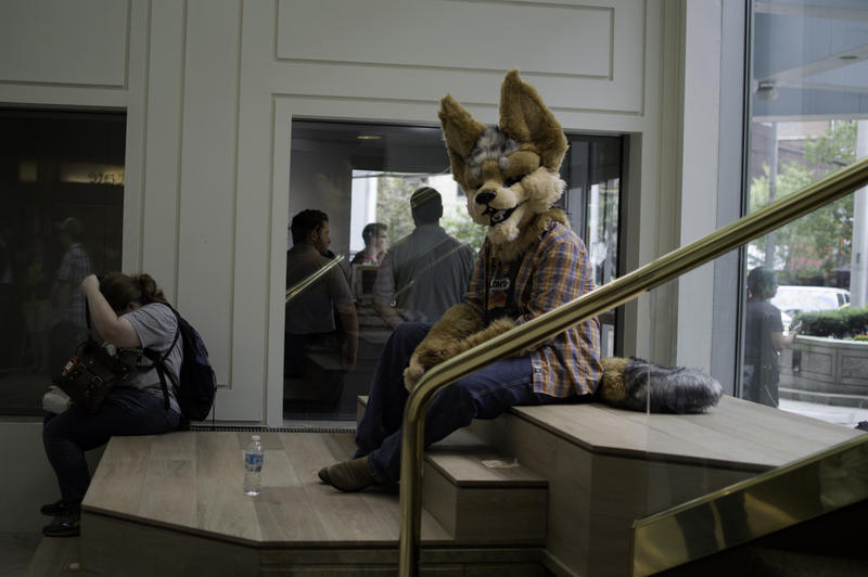 Duff from Connecticut inside the Westin Hotel watching fellow furries arrive on Thursday.