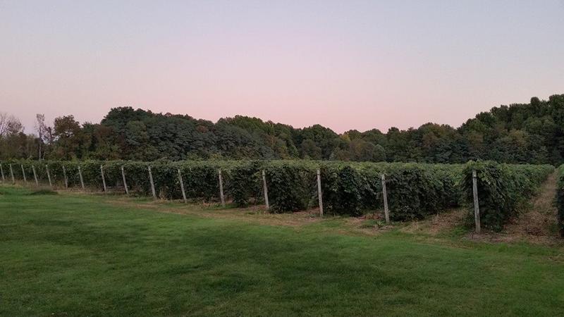 Vineyards at 6 Mile Cellars
