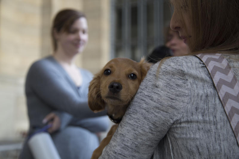 Rescued retriever mix Boudin cuddles with passersby outside the City-County Building on Thursday, May 19, 2016. Saved from a shelter in Louisiana, Boudin traveled with an Uber driver to help raise money for the Western PA Humane Society.
