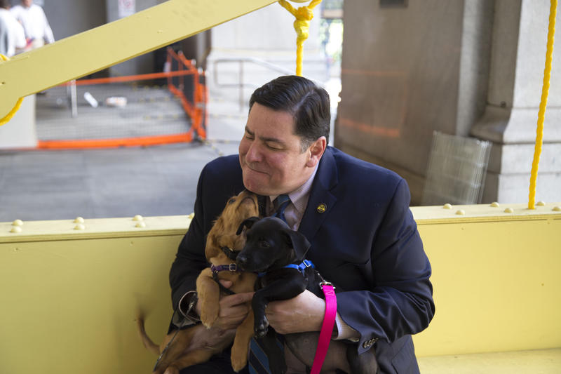 Mayor Bill Peduto holds puppies Boudin and Betty outside the City-County Building on Thursday, May 19, 2016, as part of a fundraiser between ride share service Uber and the Western PA Humane Society.