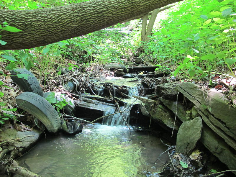 A stream courses through Hays Woods.