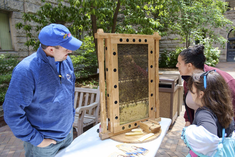 Master beekeeper Steve Repasky shows an observation hive to visitors at Bee Wise on Wednesday, June 8, 2016.