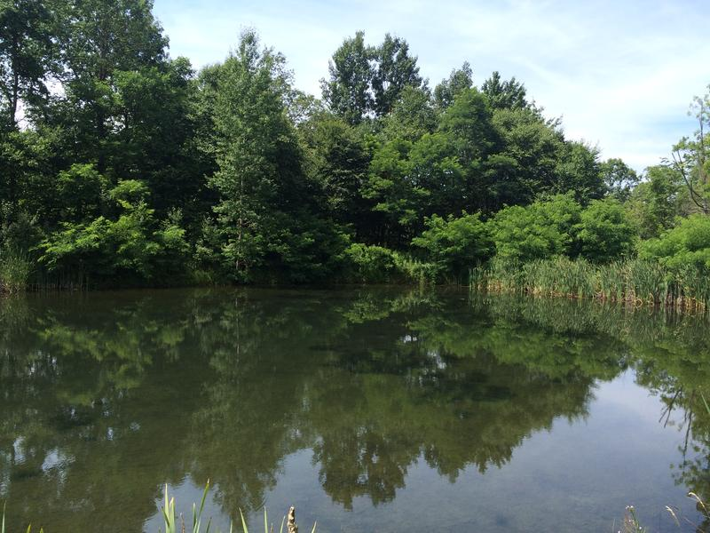 Trees are reflected in the final treatment pond of a constructed wetland meant to cleanse acid mine drainage in Somerset County.