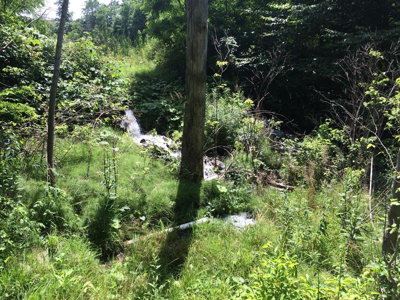 Water from the final treatment pool of a constructed wetland in Somerset County releases purified water into Lamberts Run, which flows into the Stoneycreek River.