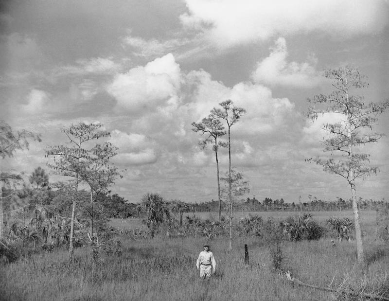 Cypress trees overhang a stream deep in the then-proposed Florida Everglades National Park, June 10, 1947. Situated at the southwestern tip of the Florida Peninsula and embracing some 2 million acres, the park became America's 28th National Park that Dec.