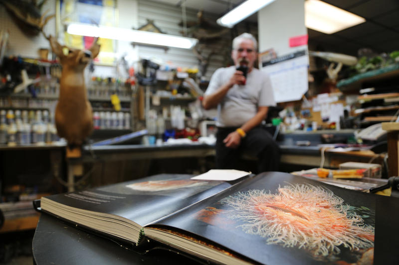 Sam Stelitano, 65, sips takeout coffee in the workshop of his Sharpsburg tackle, taxidermy and gun store on Wednesday, Sept. 14, 2016. Fish are his passion, he said. He's inspired by books and YouTube videos that depict motion he mimics in his designs.