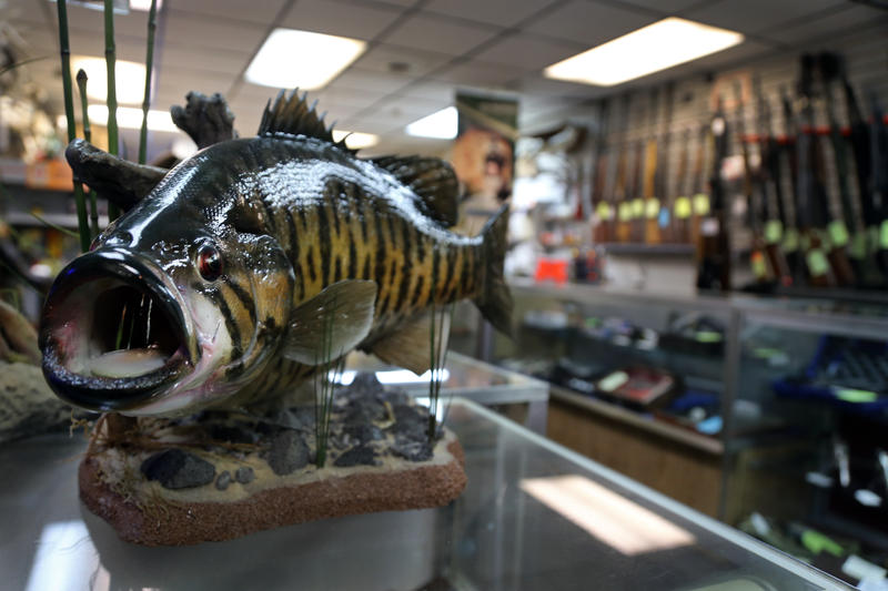 Fish are master taxidermist Sam Stelitano's passion, he said. The Sharpsburg native draws inspiration from books, photos and YouTube videos that depict motion he tries to mimic in his designs.