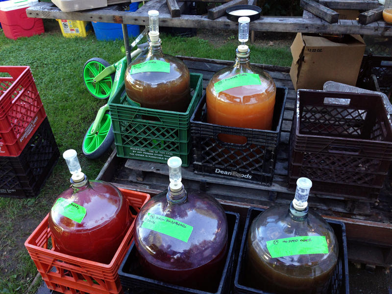 Batches of cider fermenting in carboys on September 24, 2016. The group adds amendments like quince, black raspberries, and serviceberries for flavoring.