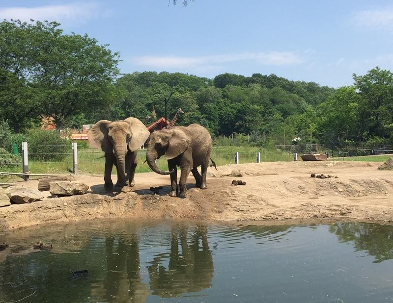Two elephants hang out by the water at the Pittsburgh Zoo and PPG Aquarium on June 10, 2015.