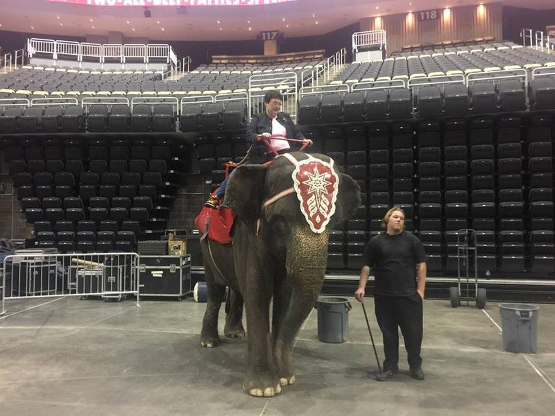 City councilwoman and mayoral hopeful Darlene Harris riding an elephant that's part of the Shrine Circus that was at PPG Paints Arena over the weekend.