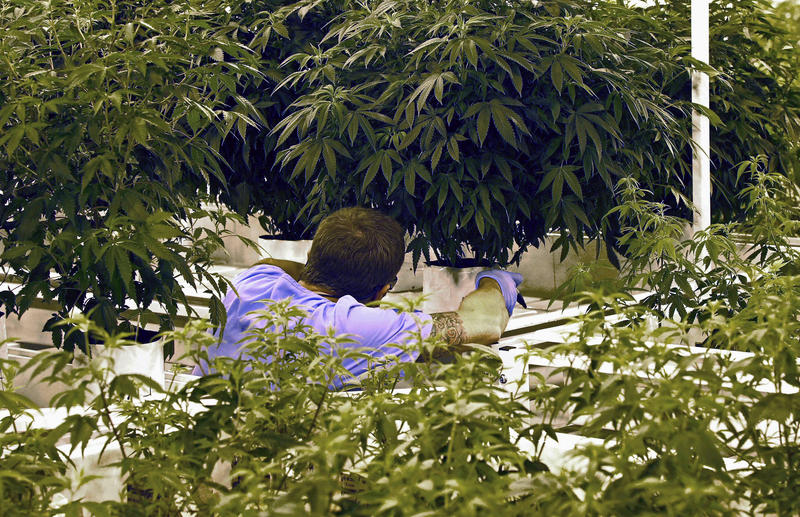 A worker checks in on a medical marijuana production facility in Cottage Grove, Minn. The Pennsylvania Department of Health has handed out a dozen permits for similar facilities in the commonwealth and will provide dispensary permits by the end of June.
