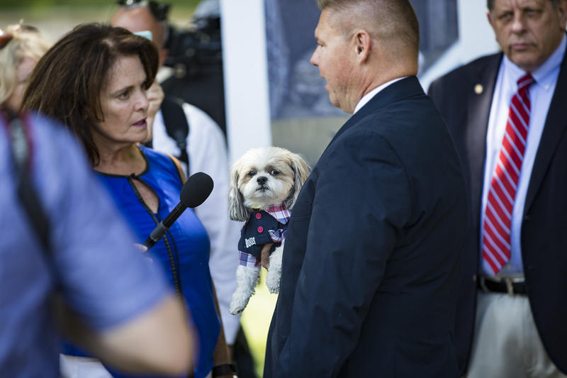 "Bulmers, the ""PA Capitol Dog,"" belongs to state Rep. Frank Farry, R-Bucks County."
