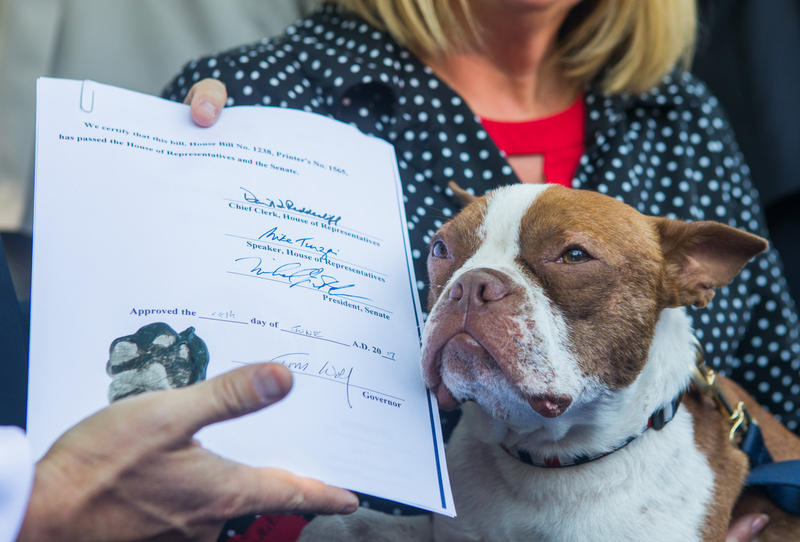 Libre, a Boston terrier who inspired Libre's Law, poses next to the signed bill.