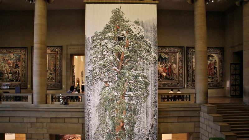"A giant sequoia cloaked in snow hangs in the Grand Stair Hall as part of the exhibit ""Wild: Michael Nichols,"" at the Philadelphia Museum of Art."
