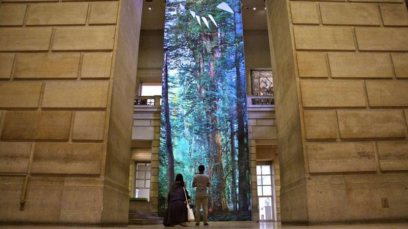 Michael Nichols' photograph of a giant redwood tree soars to the top of the Great Stair Hall at the Philadelphia Museum of Art.
