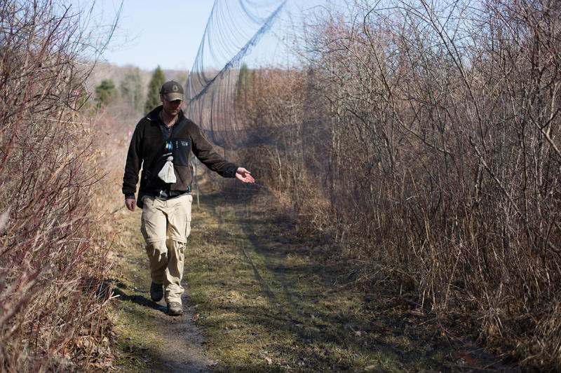 Powedermill Nature Reserve researcher Luke DeGroote walks along the nets used to capture birds at the reserve.