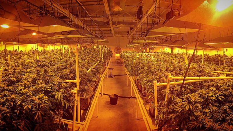 "Inside the Garden State Dispensary ""grow"" in woodbridge, New Jersey."