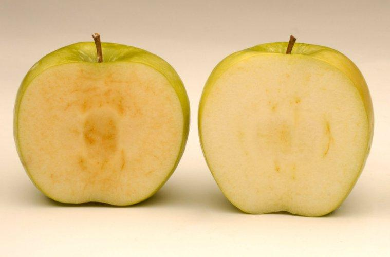 Arctic apples have been genetically engineered so that they don't turn brown when they are cut open.
