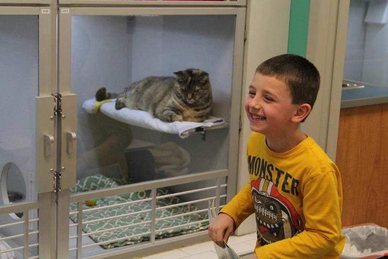 Levi Albert, 5, laughs after he shows a picture in a story book to a cat at the Human Animal Rescue in Homewood.