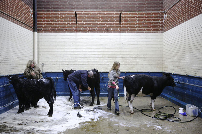 Linda Cramer, left, husband Ken Cramer, center, and Brittany Truax, 18, all of Butler, Pa., wash their cows at the Pennsylvania Farm Show Complex. State lawmakers met at the complex to talking about concerns for the future of agriculture in the state.
